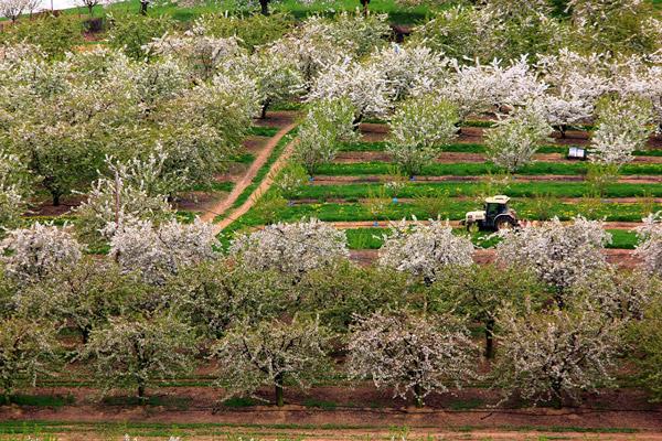 cerise de bessenay tracteur cerisier